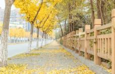 银杏叶道路