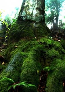 生态原始森林