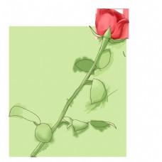 情人节红色的玫瑰花