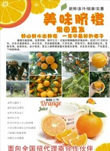 橙子宣传单