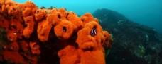 潜水 水下