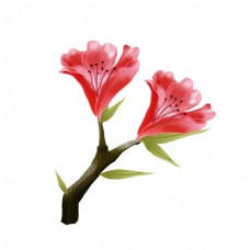 手绘花卉png素材