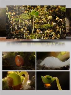 种子发芽生长延时摄影
