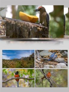4K大自然中的鸟类实拍