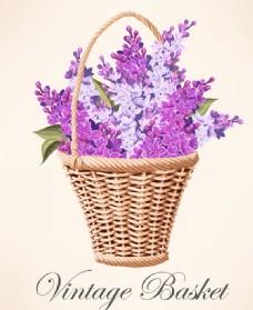花篮紫丁香