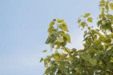 清新风格植物摄影图