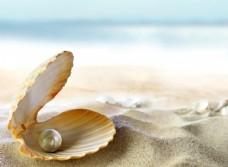 贝壳 沙滩 珍珠 高清