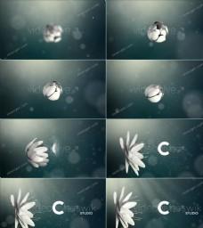 白色悬浮花朵AE模板