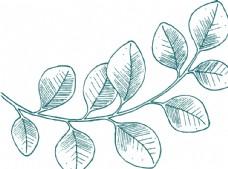 绿色植物线描-小叶