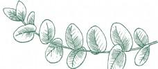 绿色植物线描