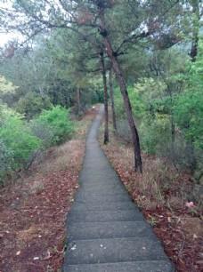 梅州百岁山登山道