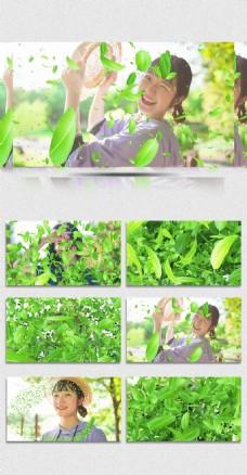 五款透明通道清新树叶粒子转场素材