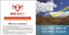 藏牦牛海报