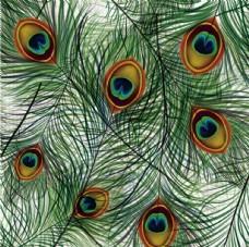 孔雀羽毛壁纸