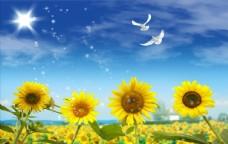 蓝天白云向日葵