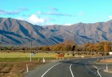 新西兰南岛自然风光