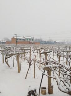 冬日里的家乡风景