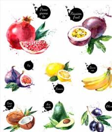 水彩水果素材