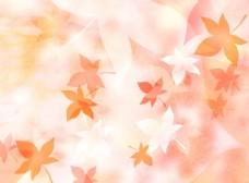 淡黄色枫叶的背景