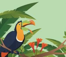 野外巴西巨嘴鸟