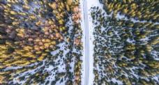 俯视森林道路
