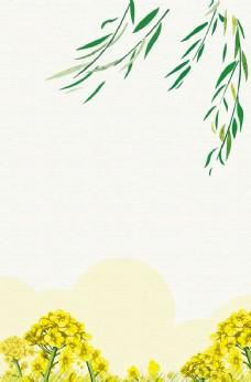 油菜花背景