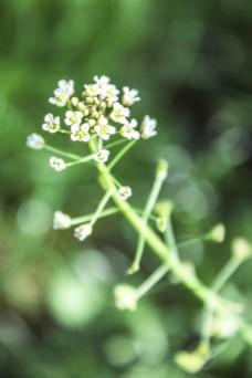 春天的花朵商用摄影