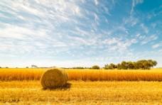 天空下的麦田