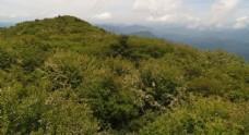 龙王垭林场