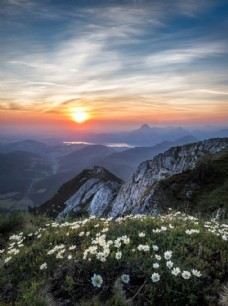 山顶上的小野花