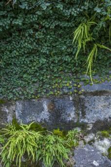 植物花草树木果实自然风光11