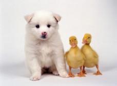 小狗摄影图