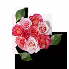 美丽的鲜花花瓣