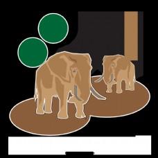 大象的脚棕色树叶