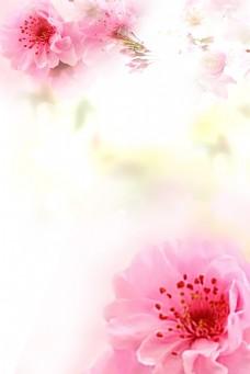 简单美丽桃花花蕊背景