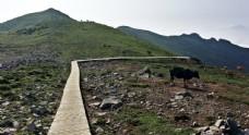 北京灵山上的牛马