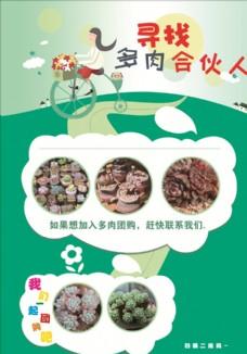 多肉 植物 宣传单 创意海报