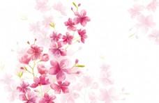 粉红色植物花朵花卉树叶手绘背景