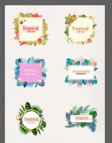 热带植物卡片
