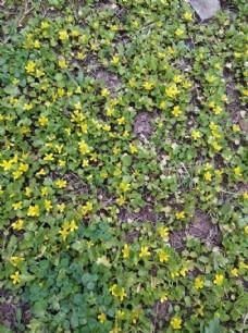 黄色鲜花  漂亮  花  小