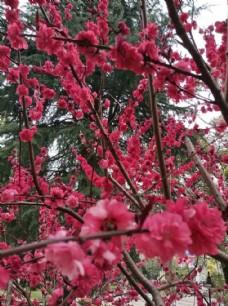 红色鲜花   漂亮  花  很