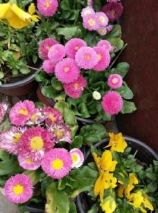 粉红色小花 漂亮  花