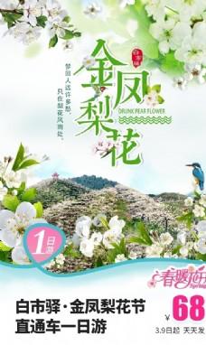 金凤梨花节旅游海报