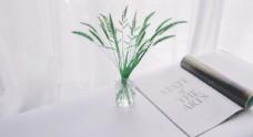 花瓶绿叶与杂志
