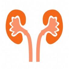 手绘人体器官肾脏矢量免抠素材