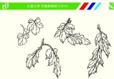 菊花手绘线条图