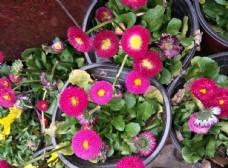 粉红色鲜花  漂亮  花