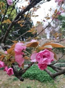 粉红色鲜花  漂亮  花  小