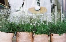 橱窗外的花草