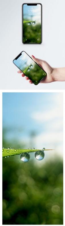 植物手机壁纸